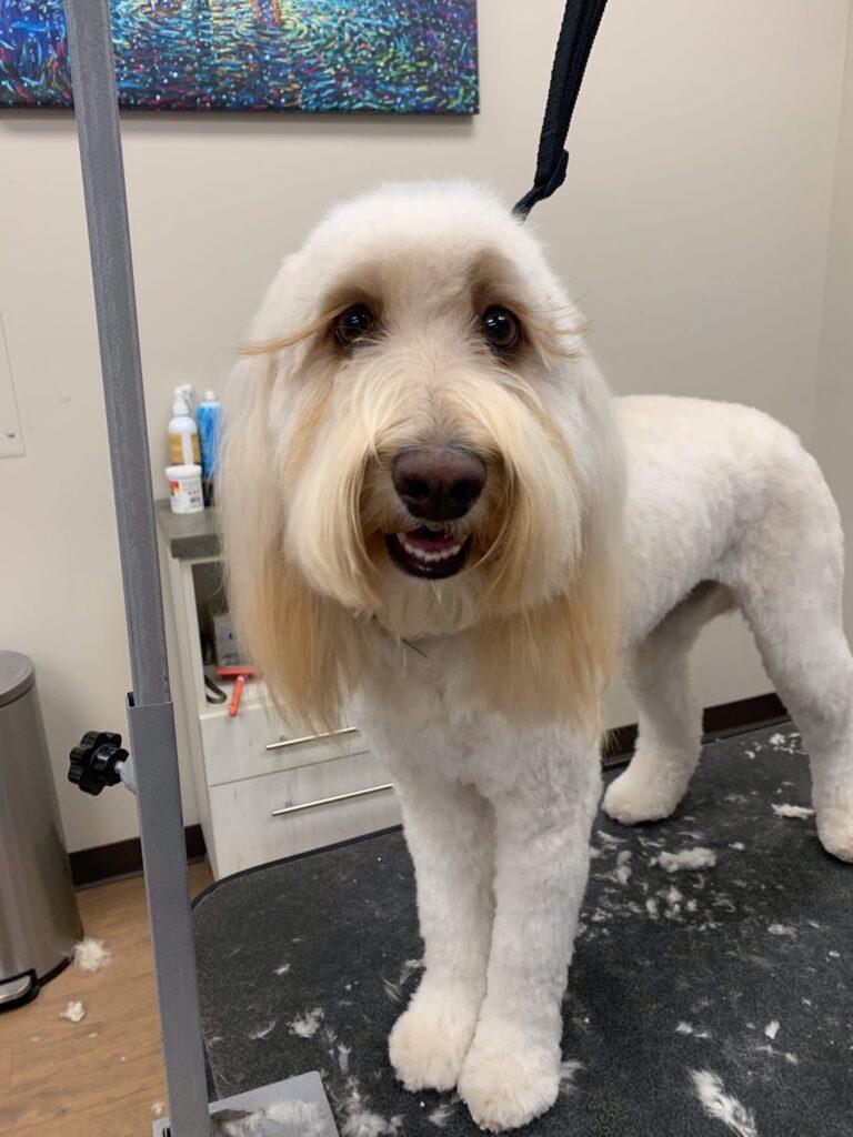 dog grooming by taryn