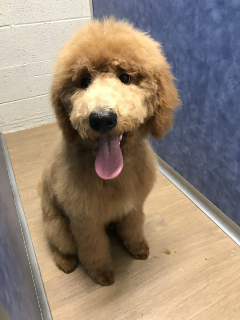 dog grooming by Mitch, Golden Colorado