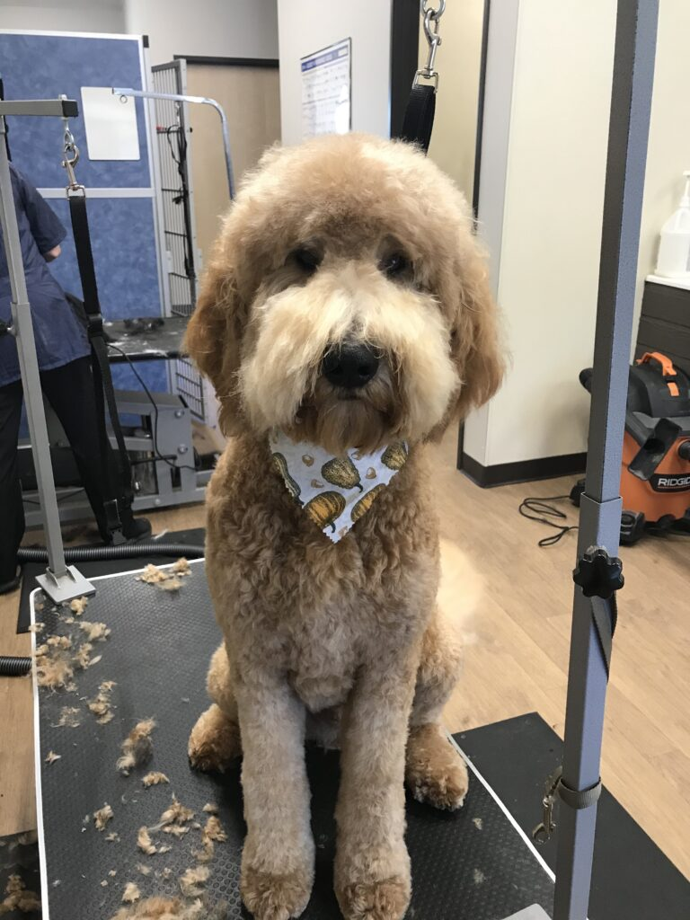 dog grooming by Mitch
